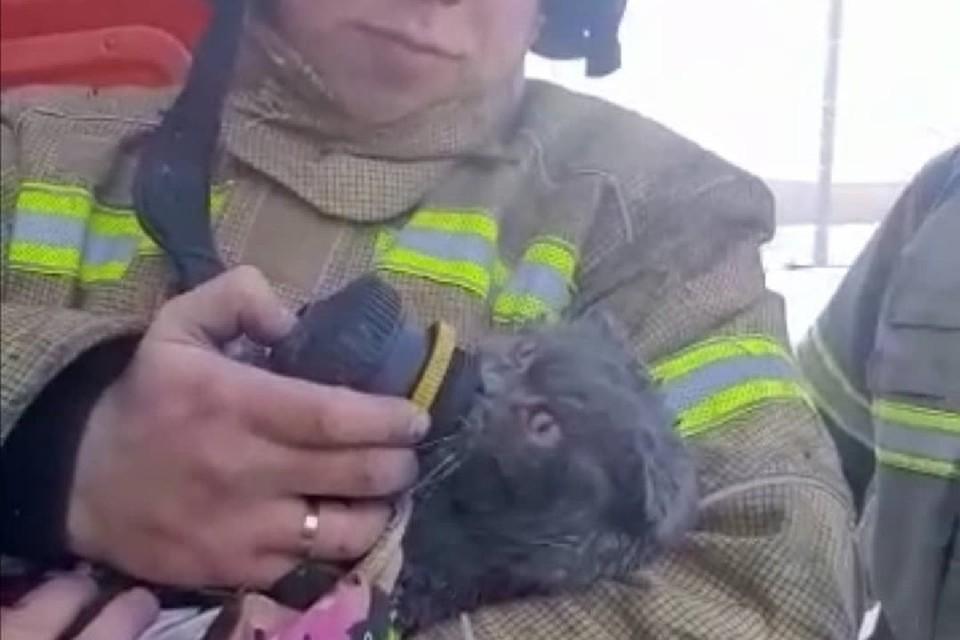 Животное откачали при помощи дыхательного аппарата.