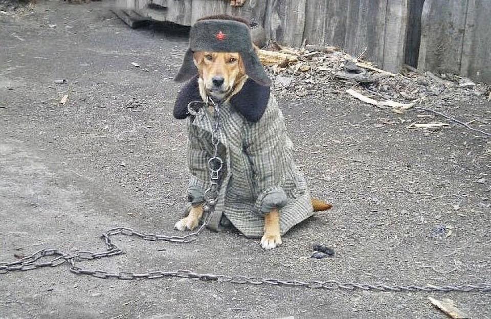 Холод будет, что называется, собачий.