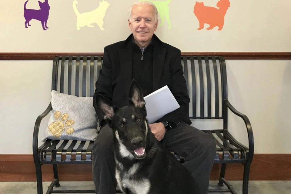 Первый пес США: Собаку Байдена приведут к присяге