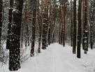 Где можно покататься на лыжах и коньках в Курске