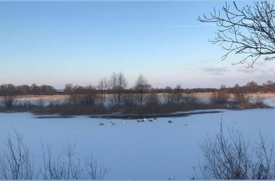 Морозы застали птиц врасплох.