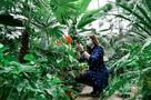 Жгучий чили, необычные лимоны и кактусы-долгожители: что выращивают в уникальной оранжерее самарского Ботанического сада