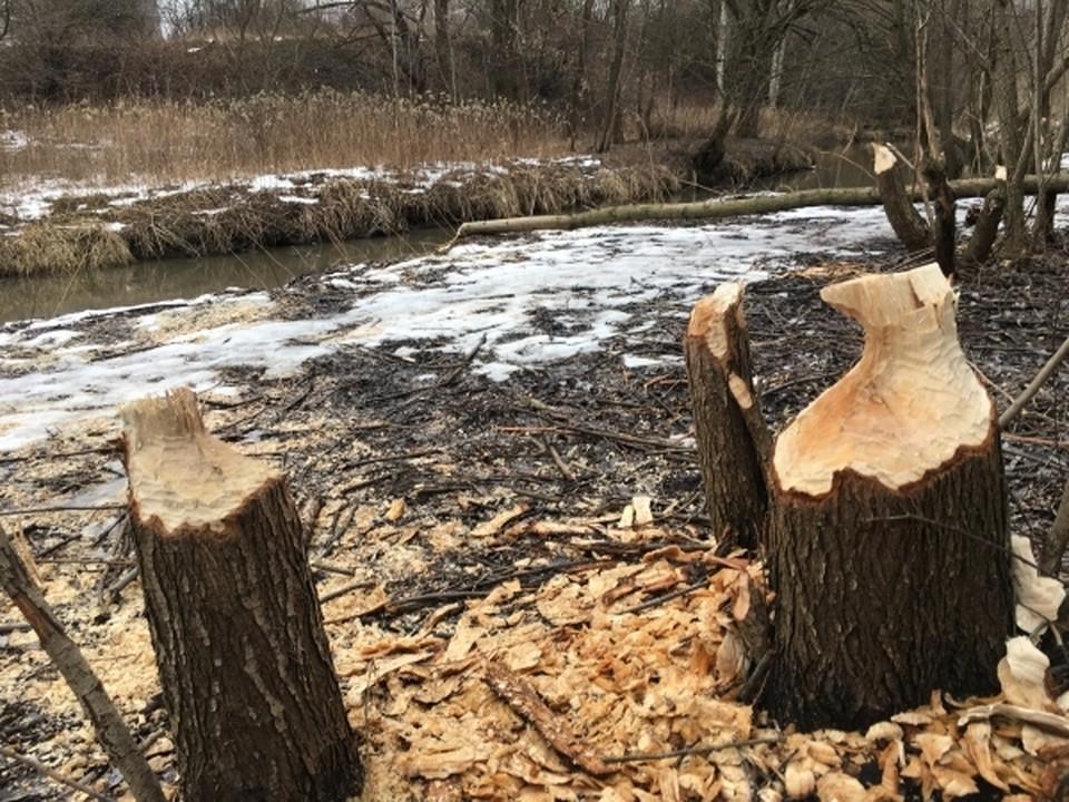епархия просила снести 30 деревьев в сквере Молодоженов.