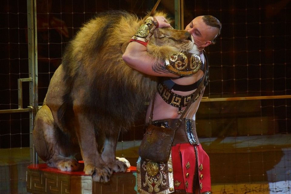 Цирку в Иркутске разрешили открыться, когда начнутся представления
