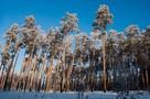 В минэкологии Челябинской области заявили об увеличении границ Каштакского бора на 200 гектаров