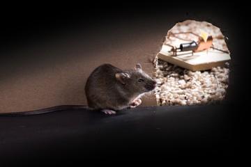 Ученые: общаясь с людьми, мыши поумнели