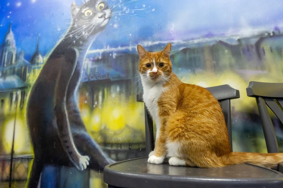 Петербургские коты заступили на новую работу в городские театры и парк