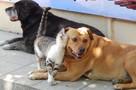 Комок эгоизма: ярославцы больше любят кошек, чем собак