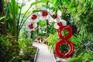 Топ-5 весенних растений: Что стоит посмотреть в Донецком ботаническом саду 8 марта