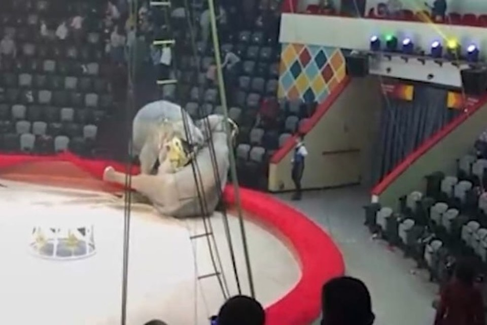 ЧП произошло во время представления. Фото: скрин с видео.