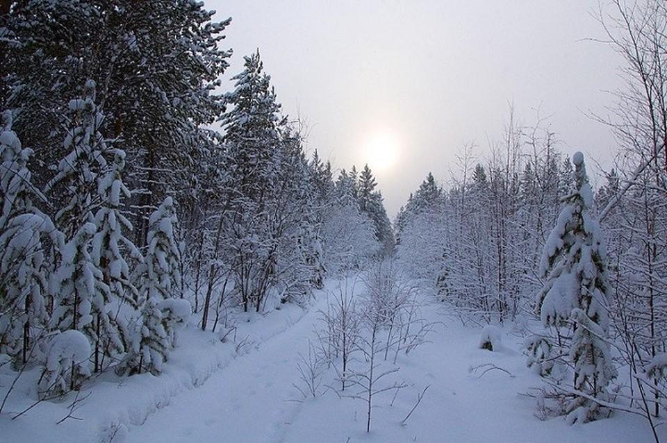 Поиски заблудившихся в лесу геодезистов завершились ночью 30 марта в Иркутской области