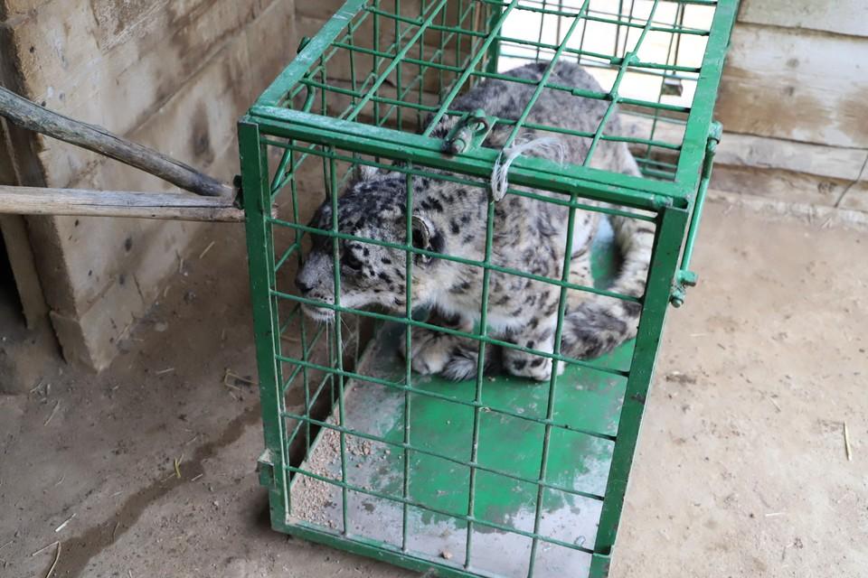 Алсу 17 лет назад спасли от браконьеров.