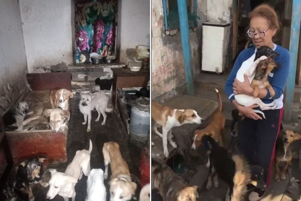 Зейнел Утюбаева относится к животным как к детям. Фото: скриншот с видео.
