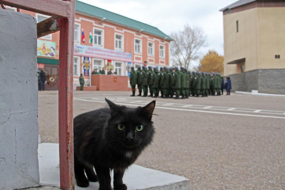 Теперь у кошек появилась своя вакцина от коронавируса
