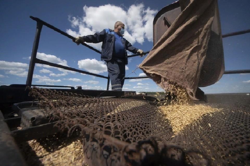 Под урожай яровых зерновых культур аграрии планируют в этом году отвести 41,5 тысячу гектаров