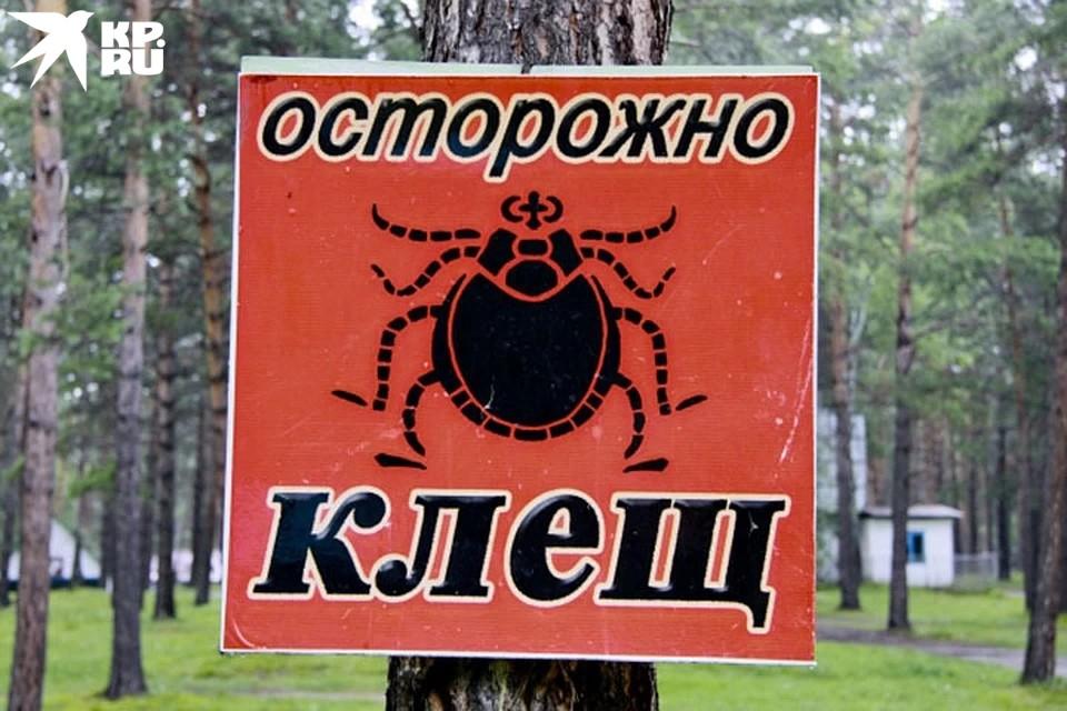 Опасные букашки готовы попить нашей кровушки, и мы должны знать, как себя от них обезопасить.