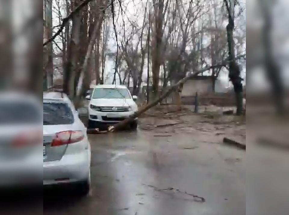 К 12-ти часам в полицию обратились 10 собственников автомобилей, на которые упали деревья. Кадр с видео Марии Сердюковой.