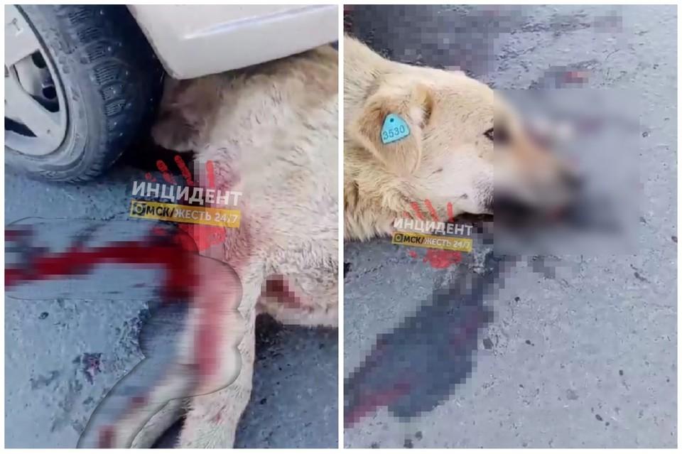 Собаку подмяло под машину и несколько метров протащило по дороге.