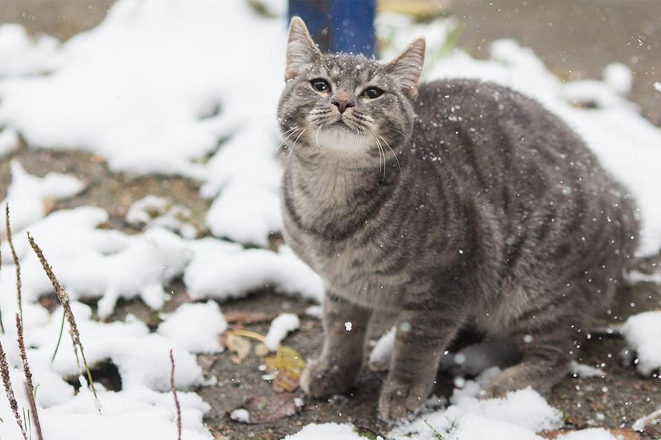 Москву ожидают осадки в виде мокрого снега, но синоптики успокаивают - всё должно скоро растаять.