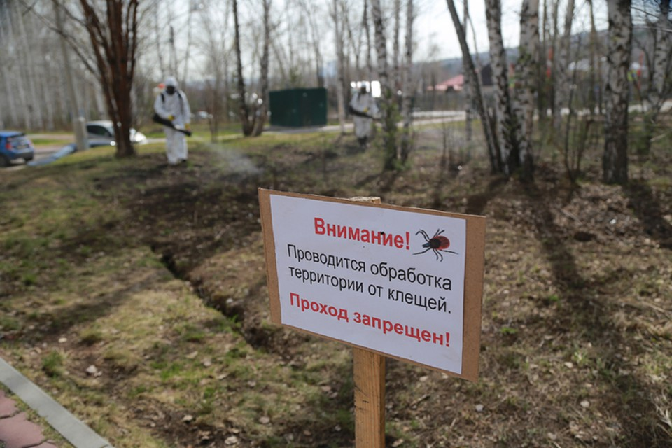 Сезон клещей в Нижнем Новгороде 2021 начался после потепления