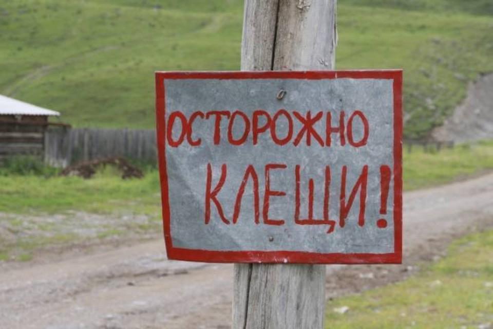 В Кировской области клещи проснутся уже в апреле.