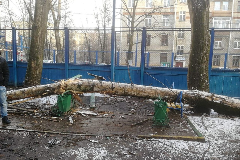 Старый тополь, который рос на площадке, затрещал и повалился прямо на отдыхающих