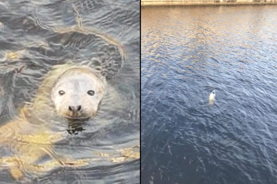Истощенный тюлененок забрел в центр Санкт-Петербурга. Фото: vk.com/sealrescue