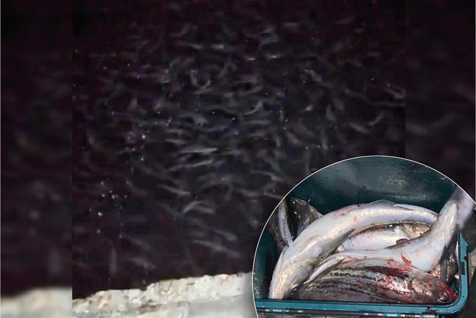 Такого количества рыбы жители Находки не видели давно.