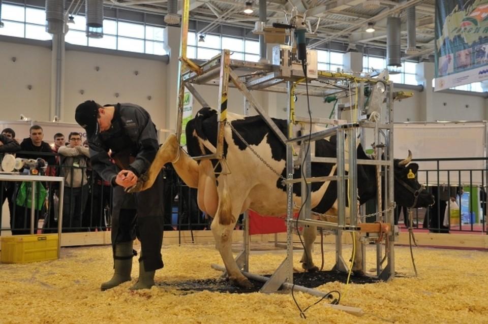 В Крыму каждый отработанный карьер становится скотомогильником
