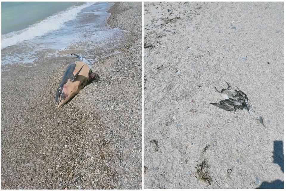 Пляж находится в неприглядном состоянии. Фото: Ольга Карась/ Черный список Крым | Симферополь | Севастополь/VK