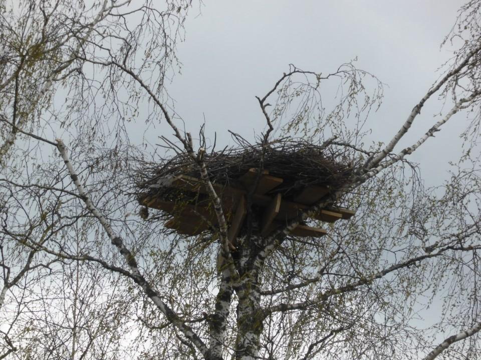 Гнездо восстановили в новом месте