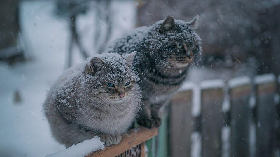 Местами ожидается дождь и мокрый снег