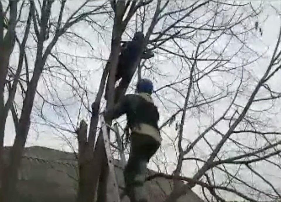 Мальчик не мог самостоятельно слезть с дерева. Фото: скриншот видео