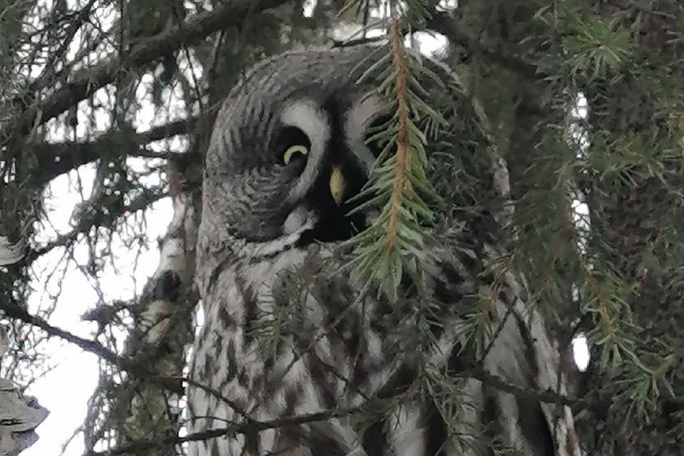 Птица уселась на дереве и никуда не собиралась улетать. Фото: Юлия Лукиянова