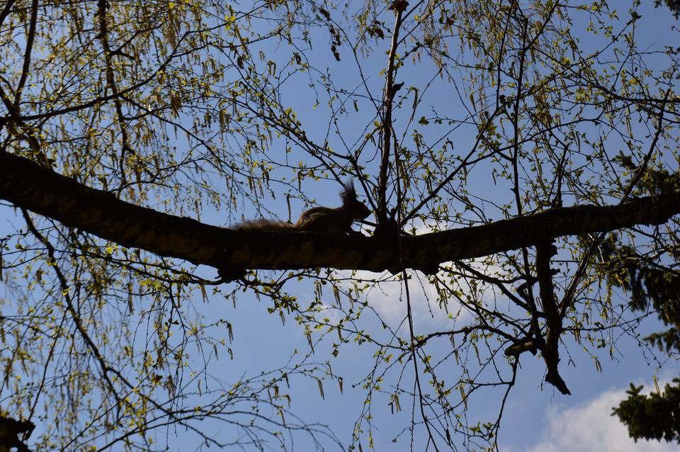 4 мая в Донецке будет солнечно, + 17 градусов