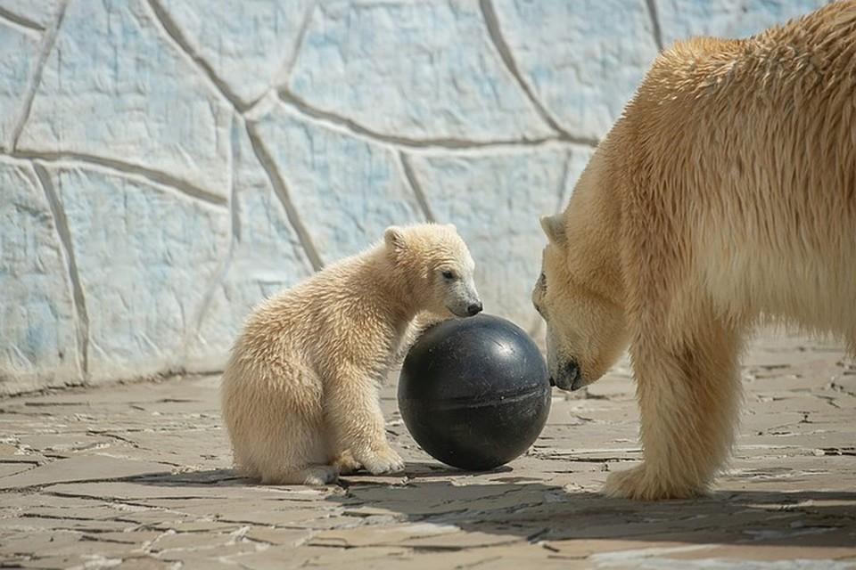 Айка сегодня отмечает День рождения. Фото: пресс-служба ростовского зоопарка