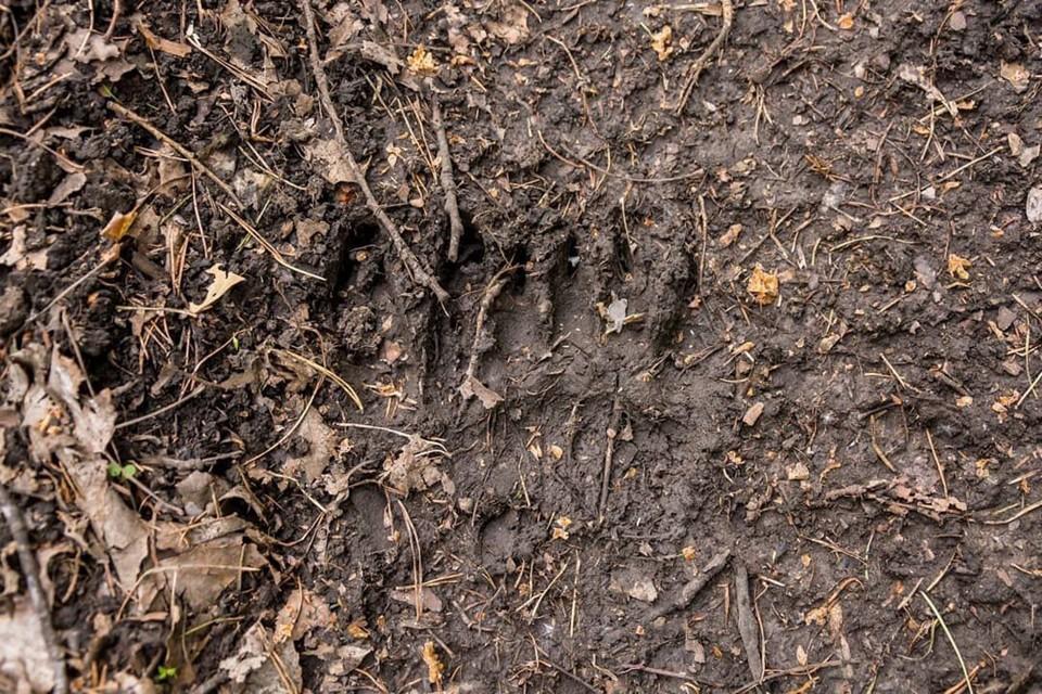 Жителям Росляково сейчас стоит аккуратнее гулять в лесополосе. Фото: Иван Лесовой / vk.com/id642742818