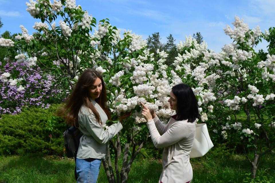 29 мая в Донецке будет небольшая облачность, + 26 градусов