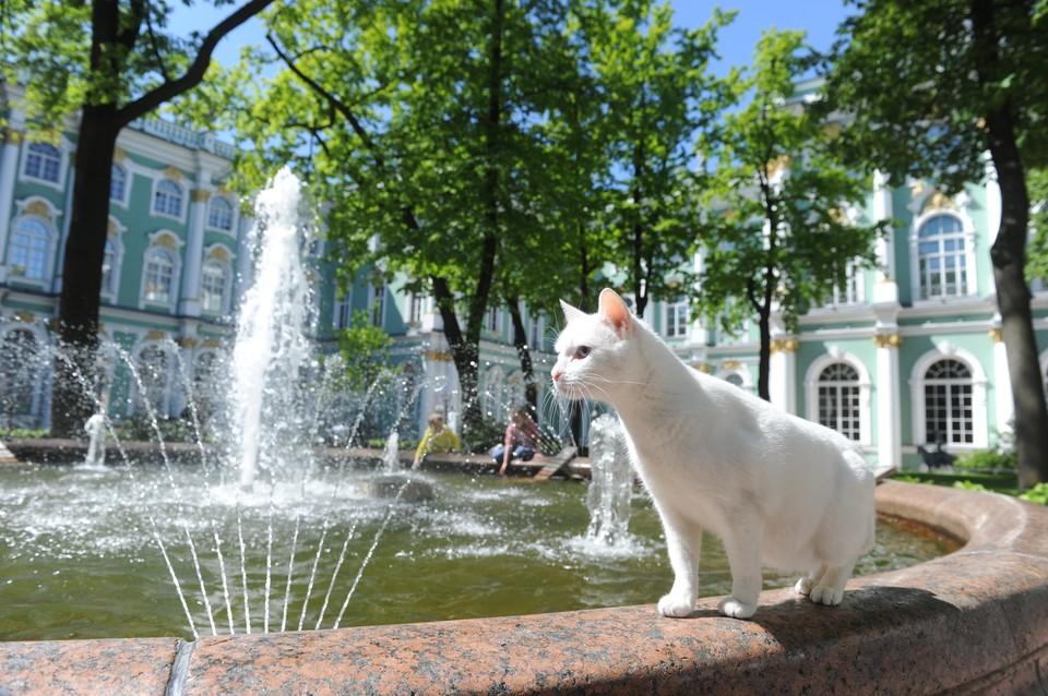 Ахилл отпраздновал День эрмитажного кота.
