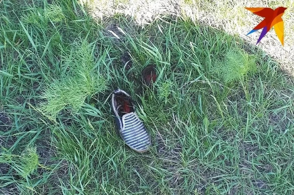"Стая напала на женщину недалеко от конюшни. Фото: предоставлено ""Комсомолке"""