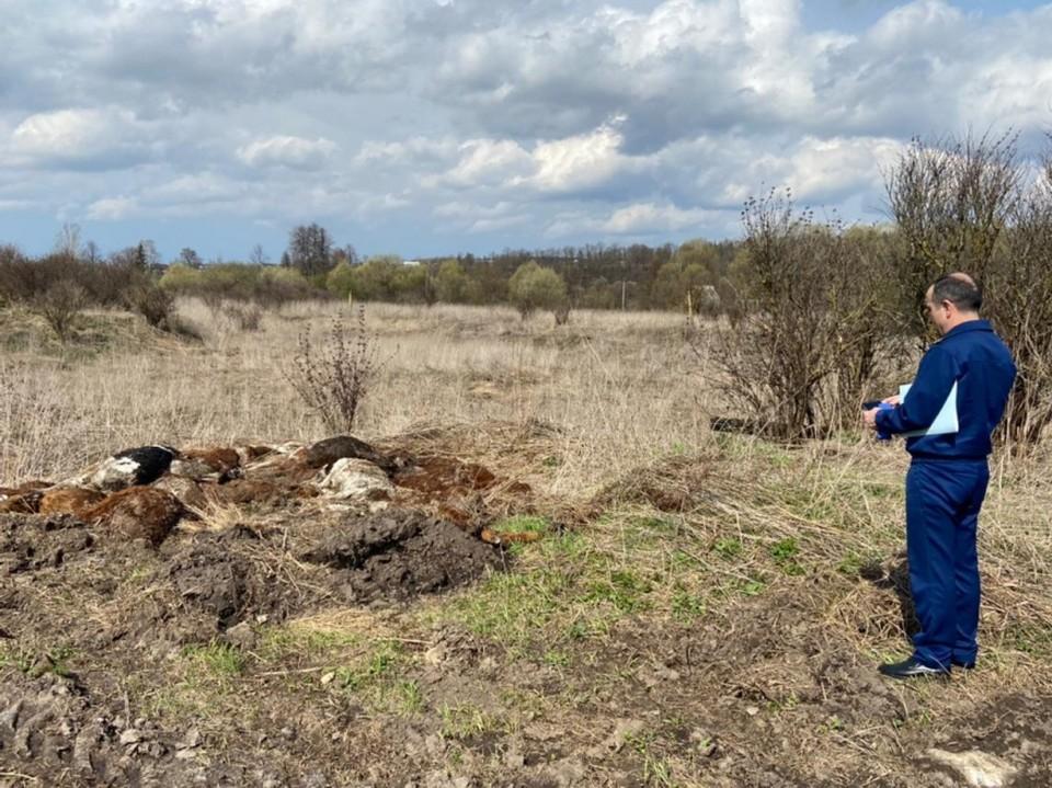 В Тульской области фермер оштрафован за брошенные в поле трупы коров