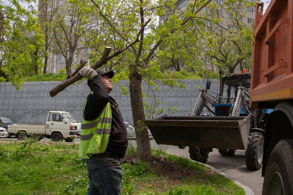 Рабочие уже и перестали считать, сколько тонн порубочных остатков распилила и вывезла каждая бригада.