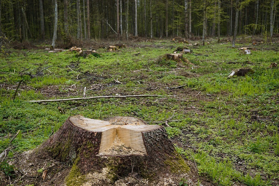Астраханец незаконно вырубил 12 деревьев