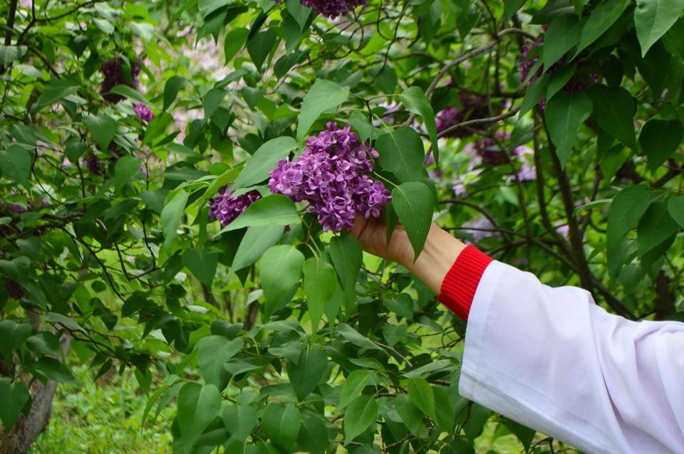 3 июня в Донецке будет дождь, +19 градусов