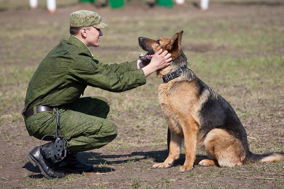 Собака не подведет. Фото: stat.mil.ru