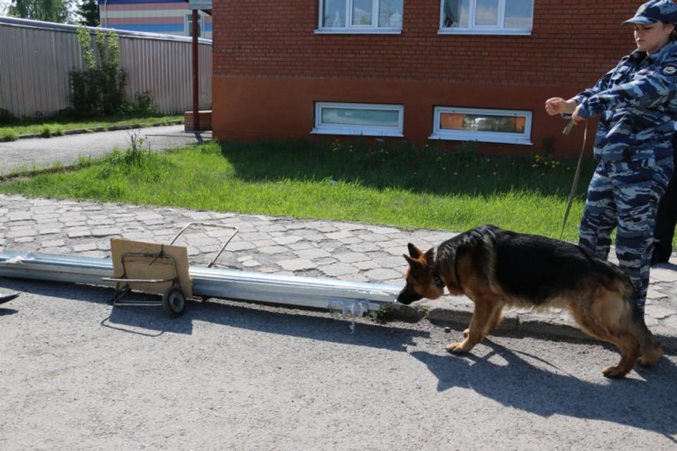 Наталья Гнеушева со служебно-розыскной собакой по кличке Енсон.