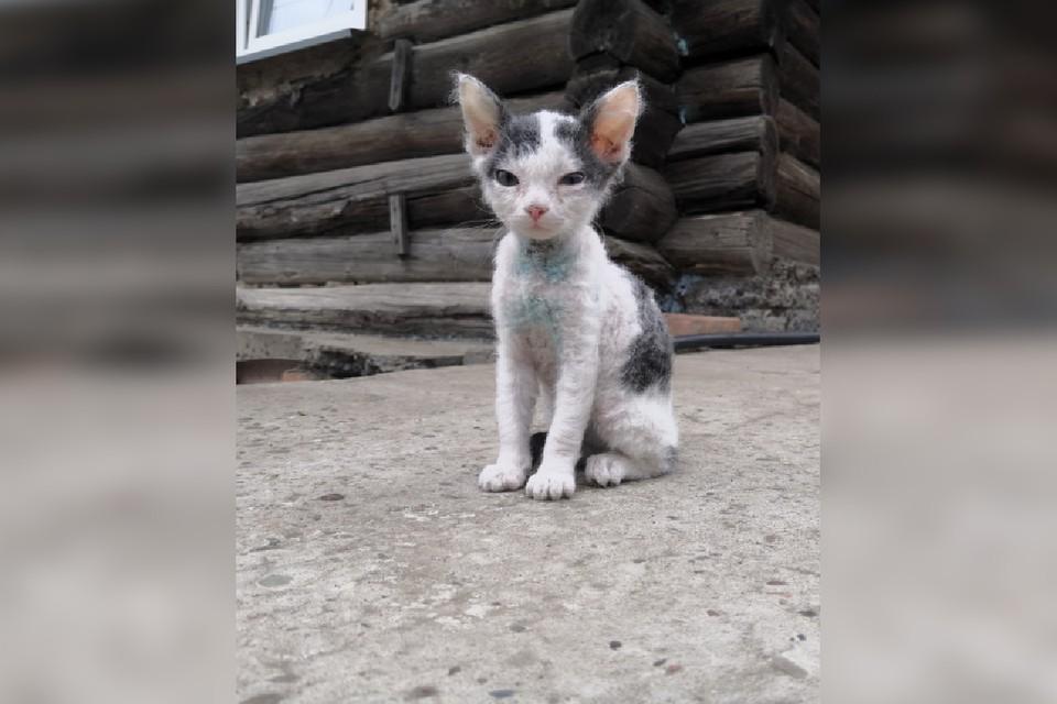 Спасенный котик Фото: МВД
