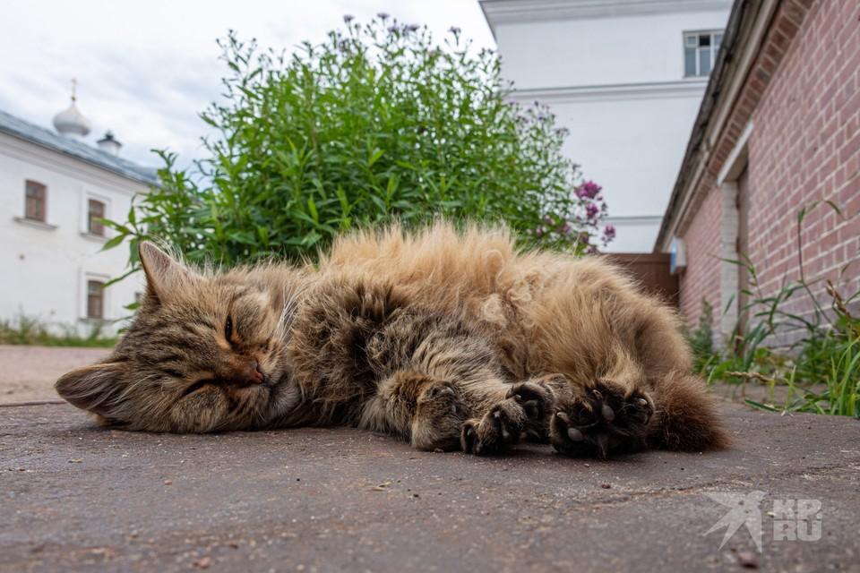В мертвой кошке под Рязанью обнаружили вирус бешенства.