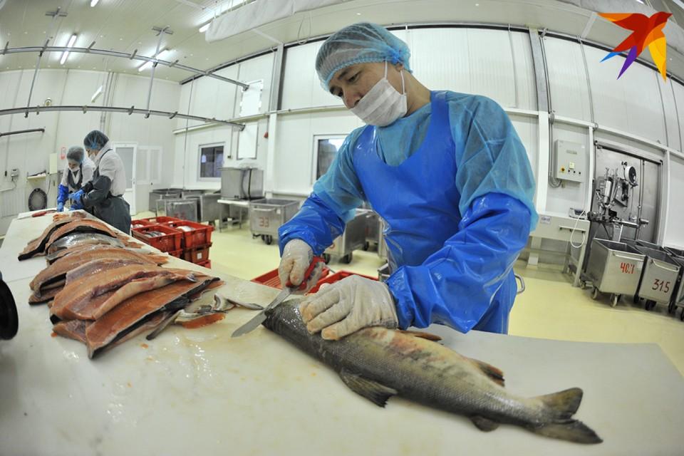 В Мурманской области рыбаки-любители не раз говорили о том, что хотели бы официально продавать свой улов.