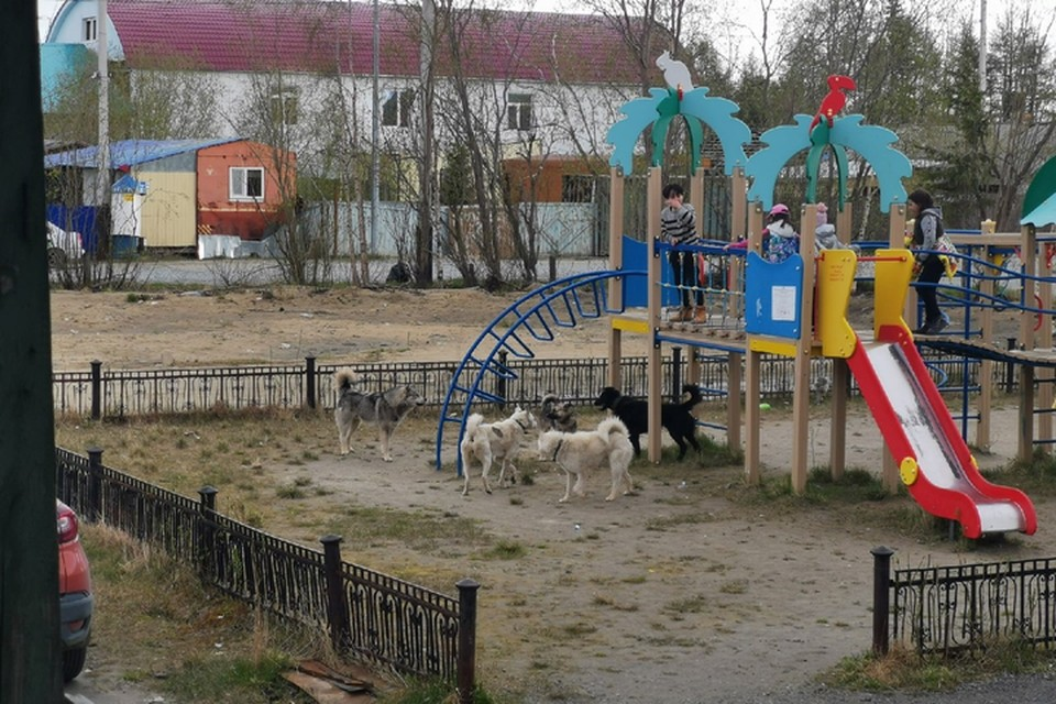 "Фото: паблик ""Подслушано в Салехарде. Двор по ул. Шалгина, 2."
